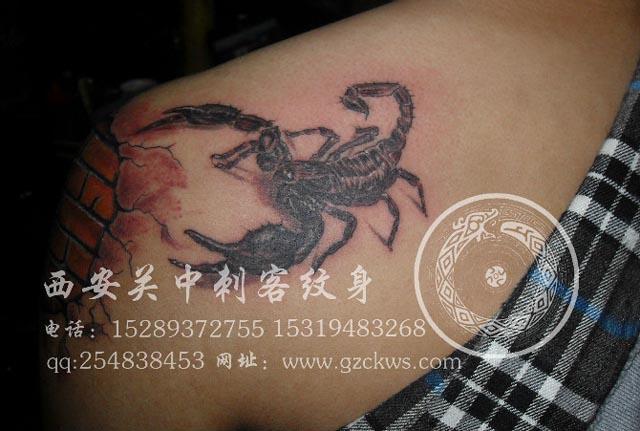 骷髅蝎子纹身图案